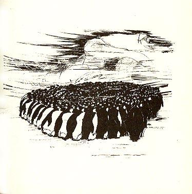 Partnersuche pinguine